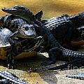 Turtle And Gator Love I by Edna Weber