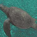 Turtle Ascending by John Holfinger