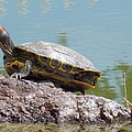 Turtle At The Lake by Nina Kindred