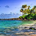 Turtle Beach by Kelly Wade