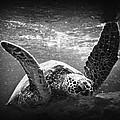 Turtle  by Byron Fair