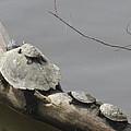Turtle Clan by Tina M Wenger