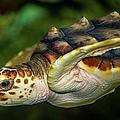 Turtle by Dennis Goodman