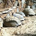 Turtle Desert by Bozena Simeth