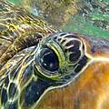 Turtle Eye by Carey Chen