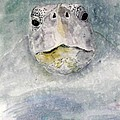 Turtle Face by Kathy Carothers