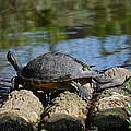 Turtle Float by Linda Kerkau