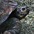 Turtle by Joel De la torre