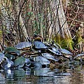 Turtle Landing by Cynthia Guinn