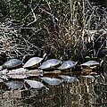 Turtle Lineup by Linda Kerkau