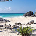 Turtle Nesting Area At Tulum by Tom Doud