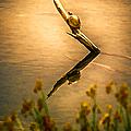Turtle On Golden Pond by John Haldane