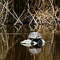 Turtle On Turtle by Ernie Echols