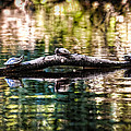 Turtle Time by Scott Hansen