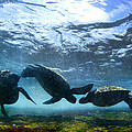 Turtle Trio by Sean Davey