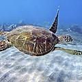 Turtle Underwater 3 by M Swiet Productions