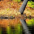 Turtles At The Edge by MTBobbins Photography