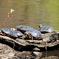 Turtles by Mim White