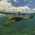 Turtles Need Air Too by Brad Scott