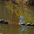 Turtles On A Log by Tom Janca