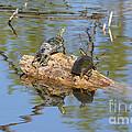 Turtles On Stump by Lori Tordsen