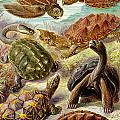 Turtles Turtles And More Turtles by Unknown