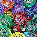 Turtles Turtles Everywhere Cozumel Mexico by Lee Vanderwalker