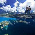 Turtles View by Sean Davey