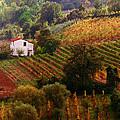 Tuscan Autumn by John Galbo