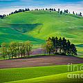 Tuscan Palouse by Inge Johnsson