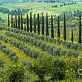 Tuscan Panoramic 3 by Mike Nellums