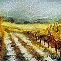Tuscan Vineyard by Dragica  Micki Fortuna