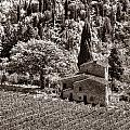 Tuscan Vinyard by Michael Kirk