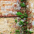 Tuscan Wall Textures by Bob Coates