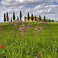 Tuscany - Pienza by Joana Kruse