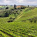 Tuscany-italy by Jennie Breeze