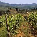 Tuscany Vineyard No.2 by Mel Felix