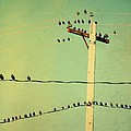 Tweeters Tweeting by Gothicrow Images