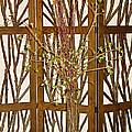 Twigs On Twigs by Robert Meyers-Lussier