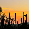 Twilight After Sunset Sonoran Desert by Ed  Riche
