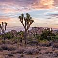 Twilight Comes To Joshua Tree by Peter Tellone