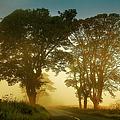 Twilight Guardians. Misty Roads Of Scotland by Jenny Rainbow