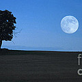 Twilight Solitude by Sharon Elliott