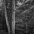Twilight Woods #1 by Rob Richardson