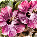 Twin Hibiscus by Donna Proctor