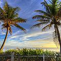 Twin Palms by Debra and Dave Vanderlaan