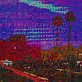Twin Palms Purple Haze by J Burns