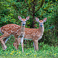Twins by Denis Therien