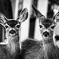 Twins by Robin Nations
