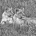 Twins V2 by Douglas Barnard